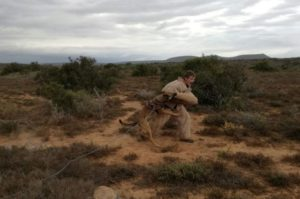 Anti-poaching k9 training