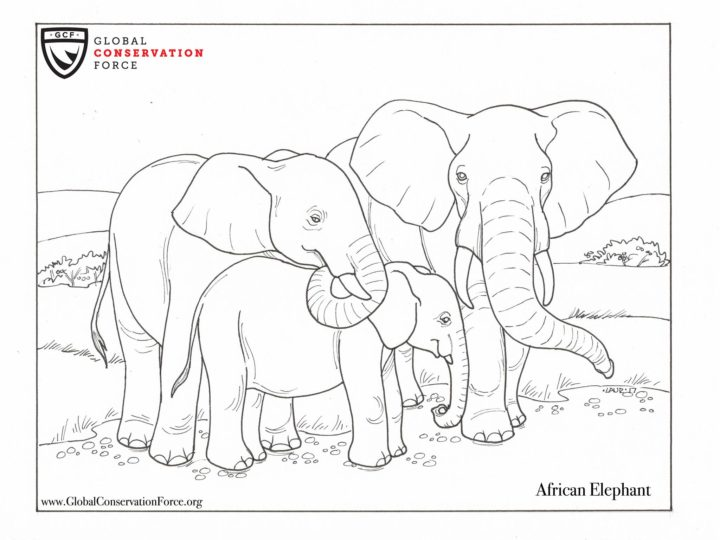 Check out our new animal themed coloring pages!