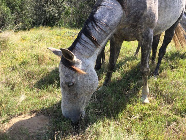 Mounted Anti Poaching Unit Update – December
