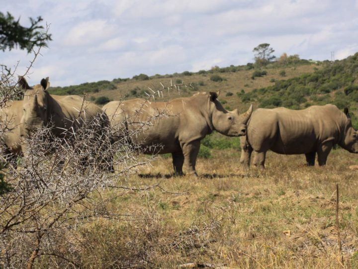 """There is no glory in anti-poaching"""