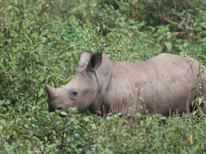 GCF Sending Emergency Backup to the Thula Thula Rhino Orphanage After Recent Attack on Orphans and Rehab Staff.