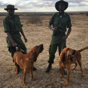 Anti Poaching Dogs