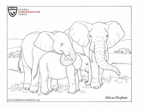 Elephant Coloring Page Archives Global Conservation Force
