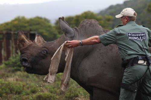 Los Angeles – Rhino Conservation Presentation with Dr. William Fowlds (Wildlife Vet)