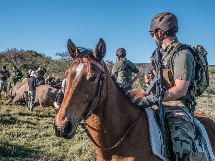 Making Progress With Our Mounted Anti Poaching Unit