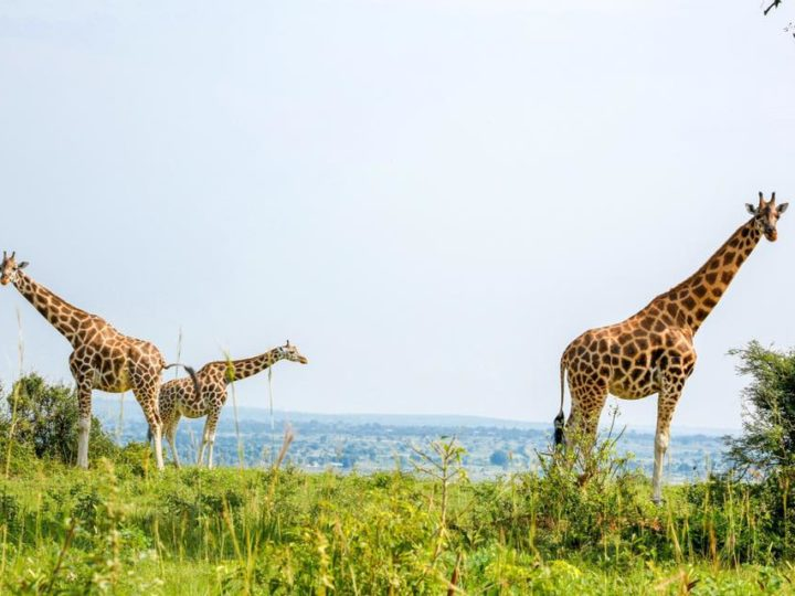 World Giraffe Day – Wine and Paint Night!