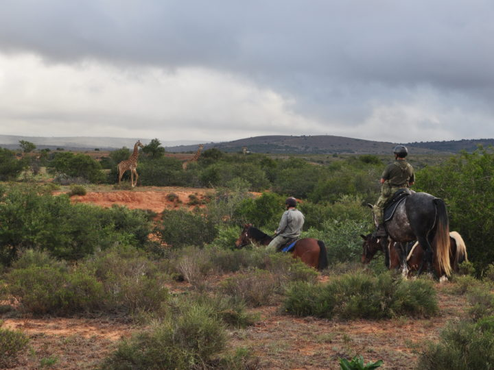 Thank you for supporting our Mounted Anti Poaching Unit Efforts