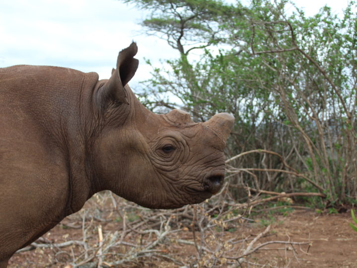 World Rhino Events 2019