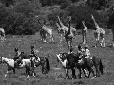 a group of mounted rangers in the foreground and a herd of giraffe in the background