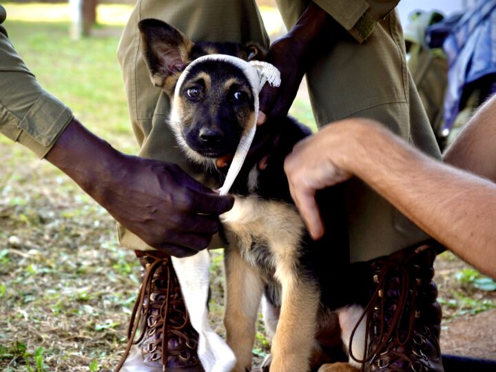 Second K9 Field First Aid Course Hosted In KwaZulu-Natal, South Africa